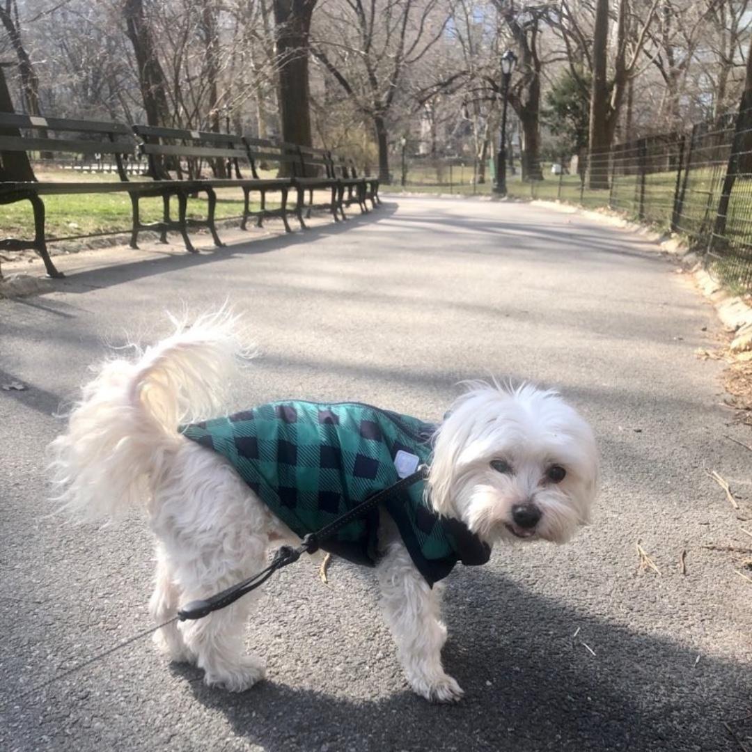 Cody wishes you a happy weekend! #maythepawsbewithyou #lukedogwalker #dogwalkeruws #happydog #uws #doggy #doggo #furbaby #dogcity  #puppy #puppylover #ilovedogs #sweet #whatabeauty #nycitydog #sweetdoggo #endoftheday #cutedog #cutepic #dogsofinstagram