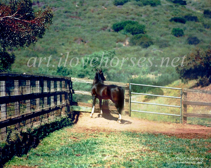 In 1996 I spent Khemosabi's 29th birthday with him near San Diego. I caught this peaceful moment of Khemo in his paddock, and now you can bring this image home on a stone slate or stone coasters, all made in the USA: https://www.etsy.com/shop/ilovehorsesnet/ … #horses #art #arabianhorsespic.twitter.com/RrwmPngVmF