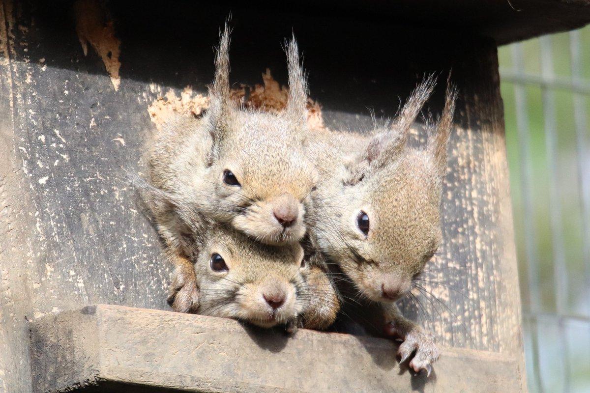 3月28日(土) おはようございます。  #井の頭自然文化園 #リスの小径 #ニホンリスpic.twitter.com/EN6fWlj2vw