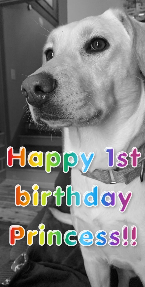 And guess what?!?? I completely forgot it was her birthday today. #deathrowpuppy #rescuepup pic.twitter.com/GHzmYL2iK6