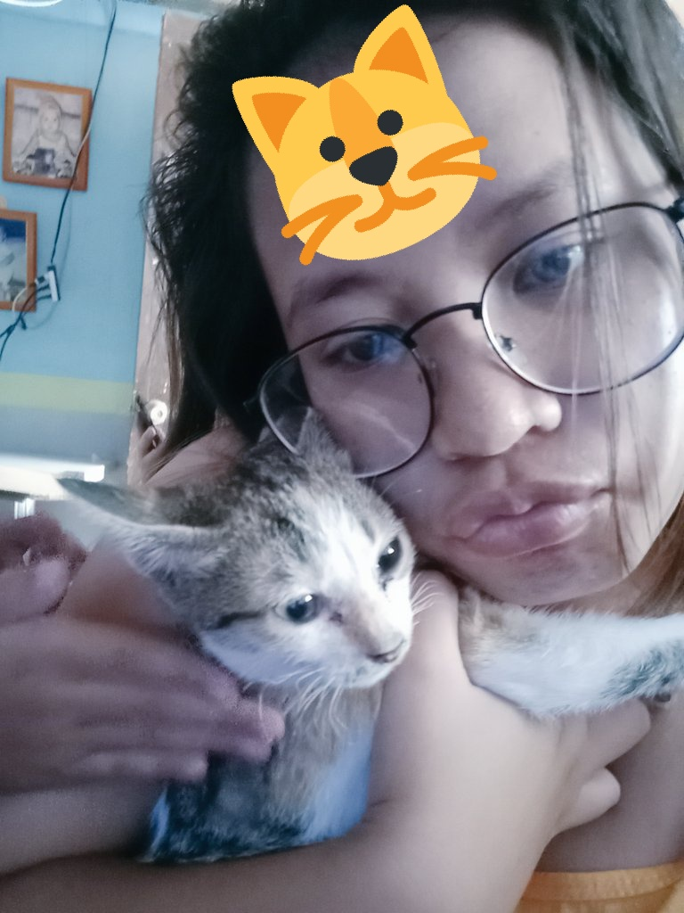 Me:Stella,Lets take a picture Stella:Meow meow #cat  #CatsOfTwitter  #catspic.twitter.com/JPR6UTwMu2