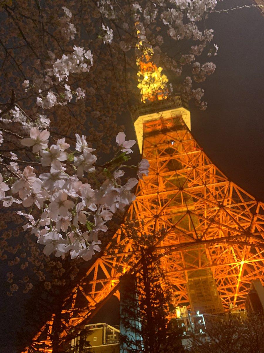 東京タワーと桜♪ もっと綺麗に撮りたいな  #東京タワー #桜 #夜景 #風景 #春 #写真好きな人と繋がりたい #Tokyotower #Sakura #night #nightphotographpic.twitter.com/WdPWK1oqmi