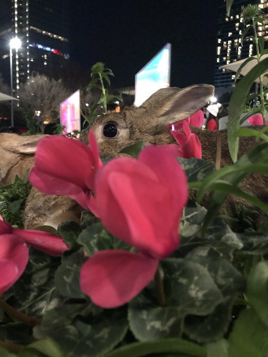 Can you spot the little bunny flower? - Theordore #rabbit #rabbits #rabbitlife #bunny #bunnies #bunnyrabbit #bunnylife #pet #pets #cute pic.twitter.com/wH8tFjWxU3