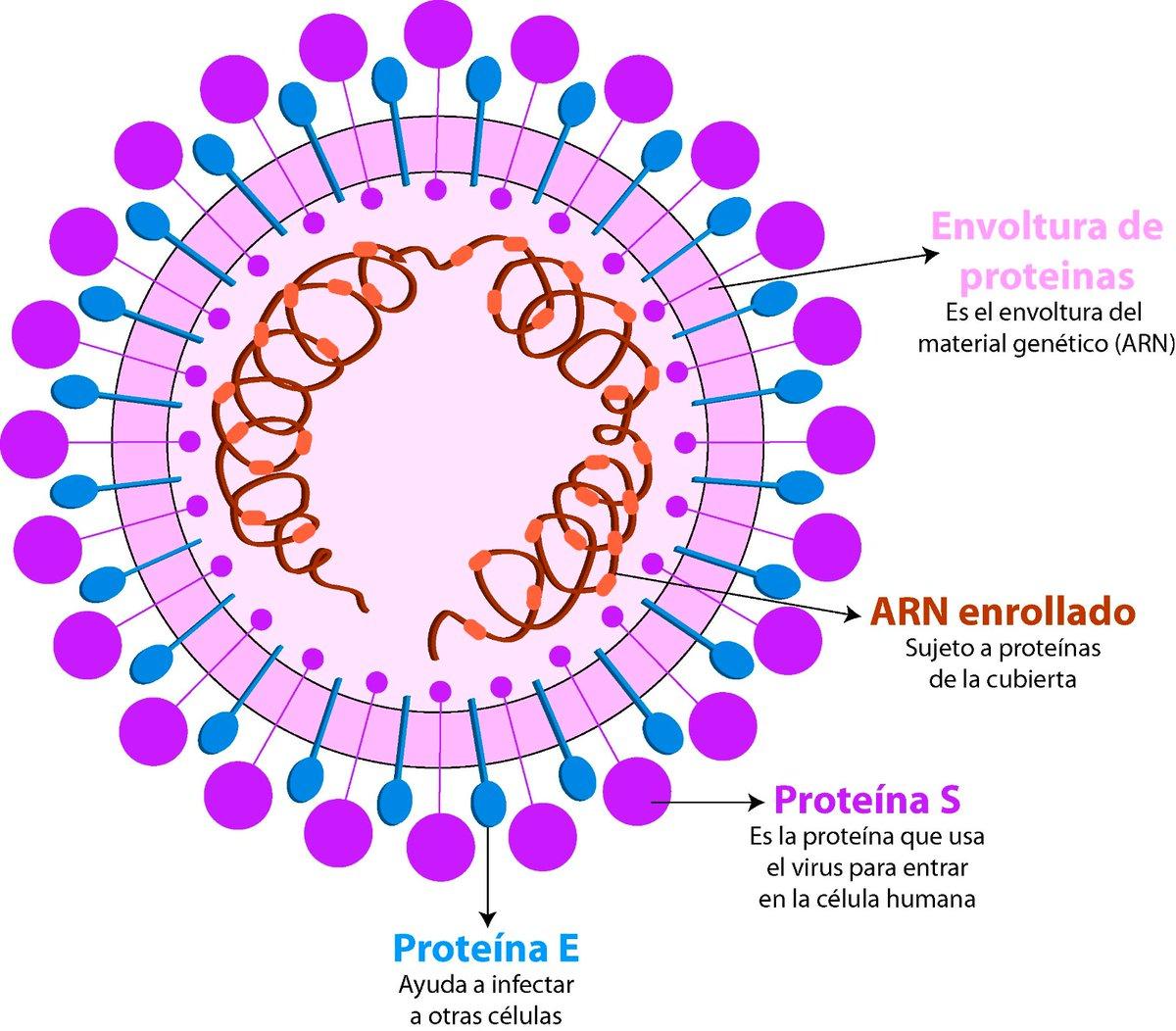 los virus tienen proteinas en su estructura