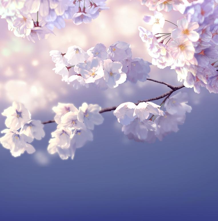 桜が見れないなら描けばいいじゃない(絵