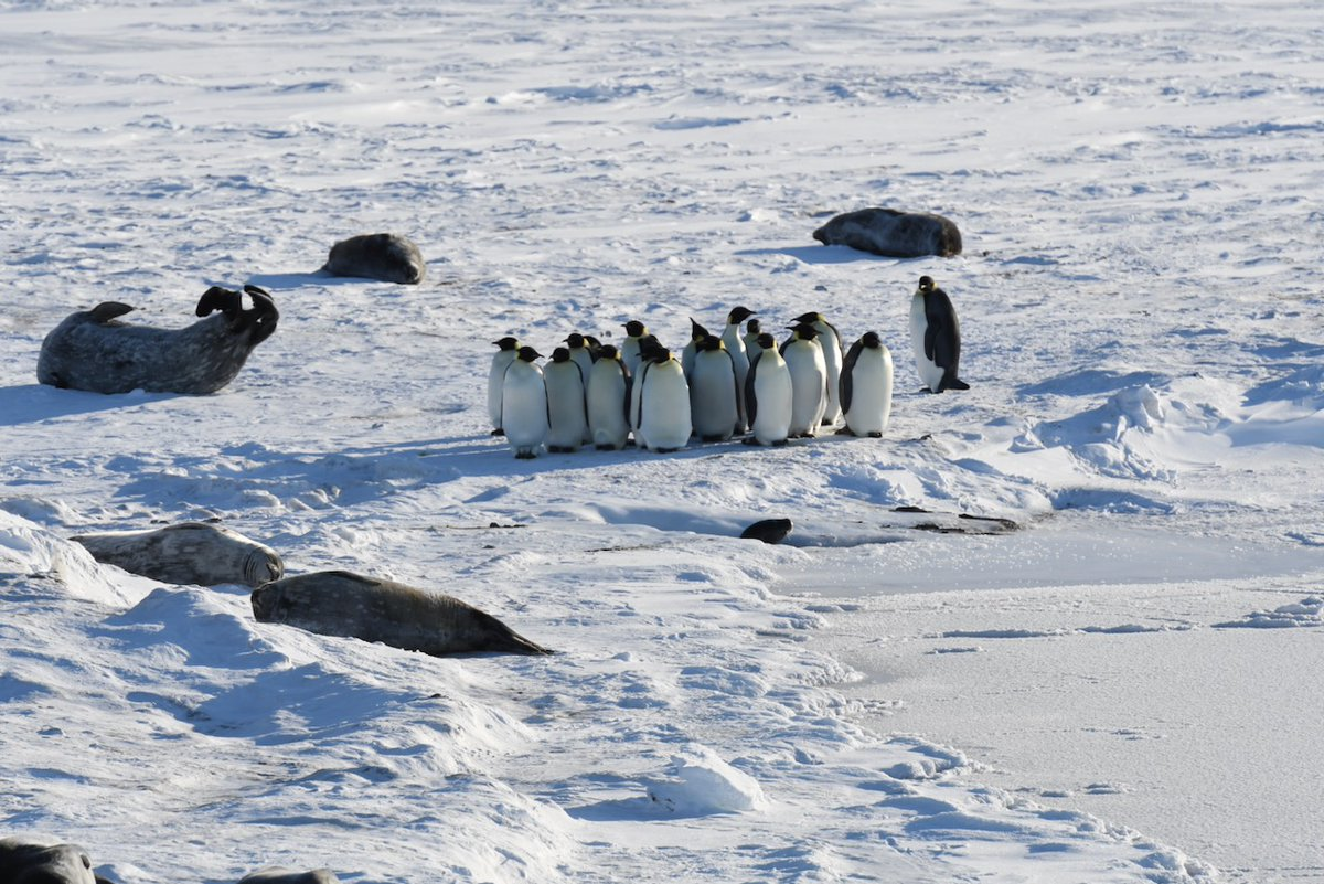 Day 3: Emperor penguins and Weddell seals for sanity.