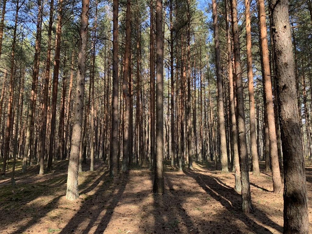 #Лес, #красота pic.twitter.com/81GvFDJN6E