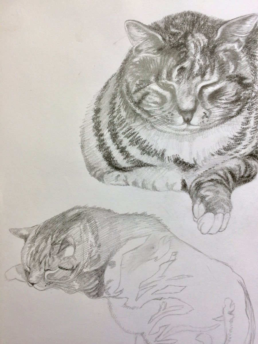 Pencil sketches of Tom #animalmarch #cats #CatsOfTwitter  #Pencildrawing #sketch #ArtistsOnTwitter #artistsoninstagram pic.twitter.com/CDctxwkFR3