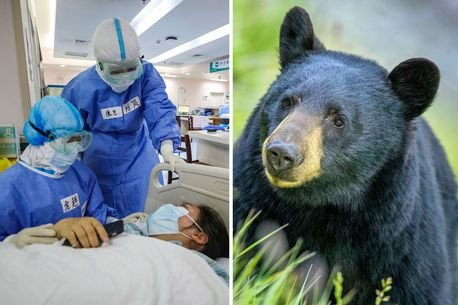 CHINESE Government: Claims Coronavirus Can be CURED by #Bear-Bile and #Goat-Horn!  https://www.dailystar.co.uk/news/latest-news/chinese-government-claims-coronavirus-can-21762279…pic.twitter.com/X2vwF8h9Fg