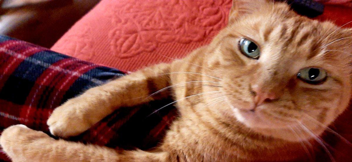 Peaceful Eyes of Benji. #Caturday #CatsOfTwitter #CatsOfTheQuarantine #cats pic.twitter.com/6FYiDlEMBO