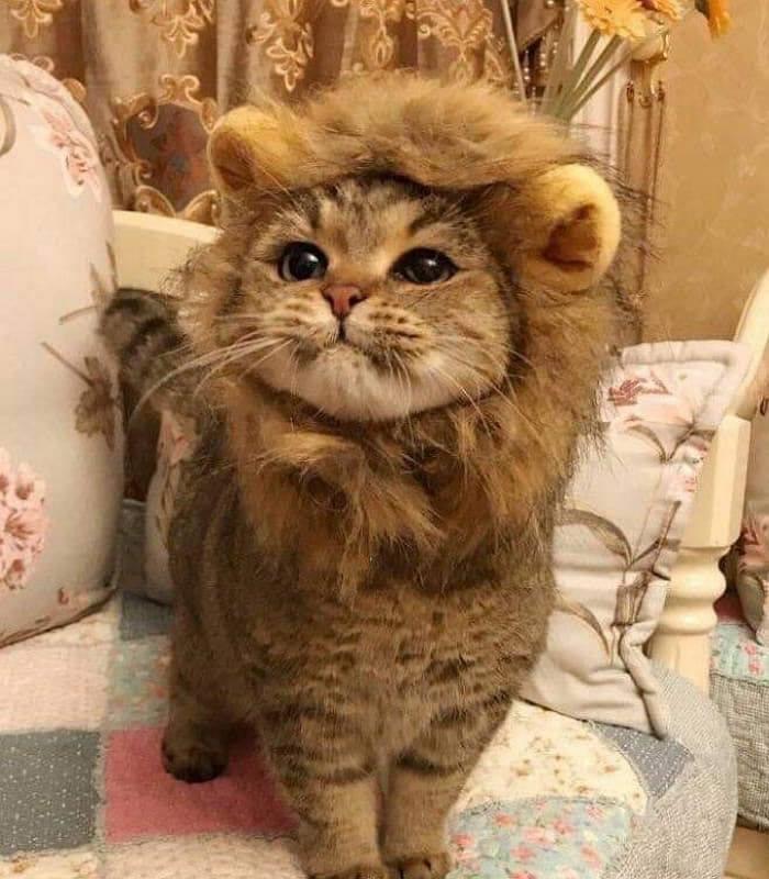 私はライオンだ