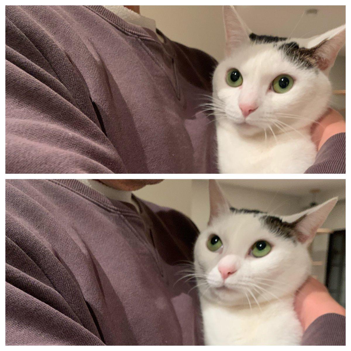 耐える猫と大騒ぎする猫#週末恒例おとうさんのしつこいだっこ #外出自粛 のしわ寄せ