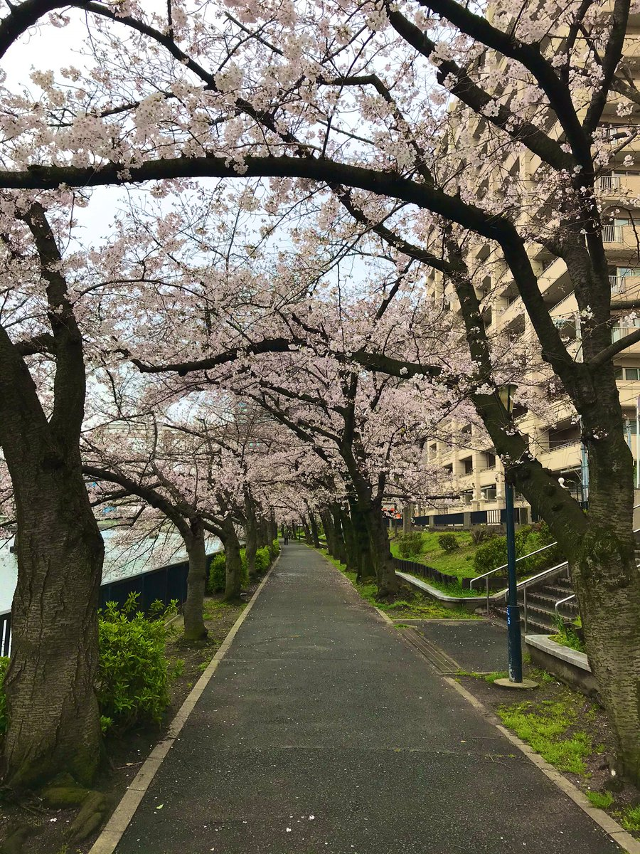 Cherry blossoms coming soon. I want to tweet that makes my heart a little fun. #osaka #JAPANpic.twitter.com/1szd2tGF0L