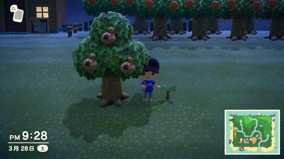 この木ほしい