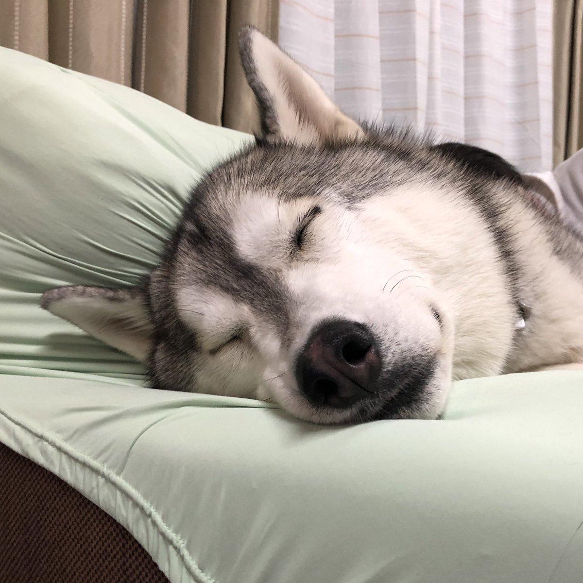 ニポくんとおシルその2!寝顔可愛いねぇ!