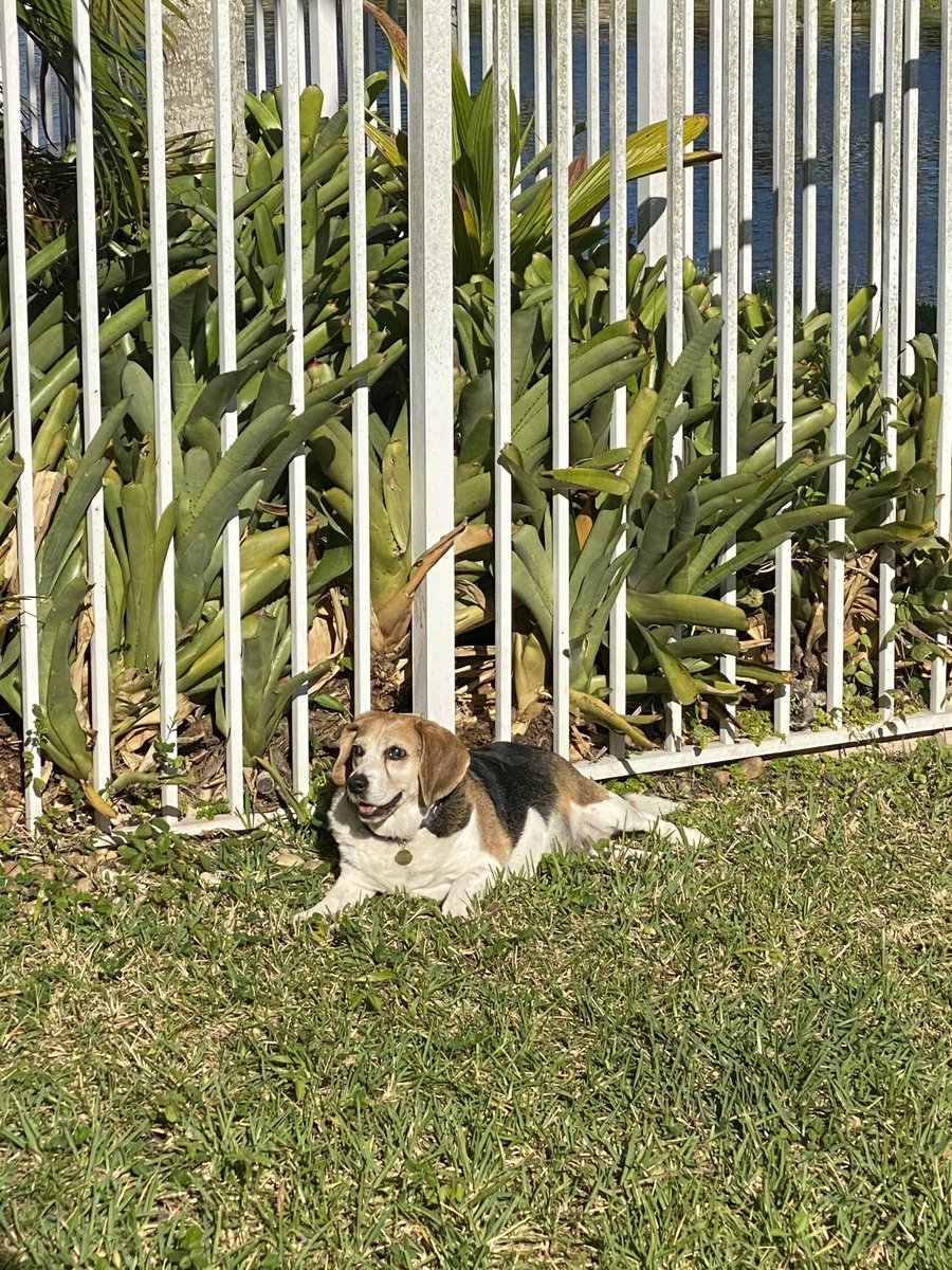 We  our new fenced in yard!! Grass on the belly and sun puddling #heaven pic.twitter.com/KvxN9sdzyV