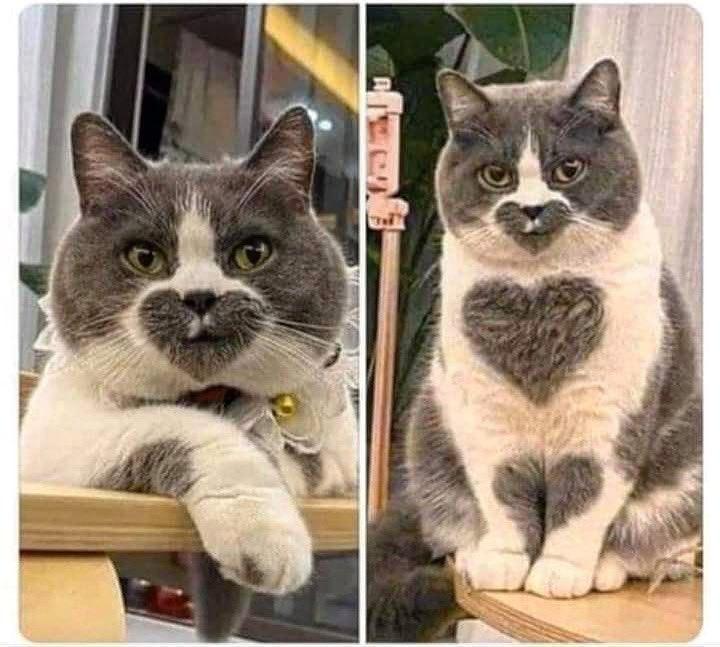 I  this #Cat.  Happy #Caturday! I hope you're having a great #Saturday!pic.twitter.com/x6OO8tSJjJ