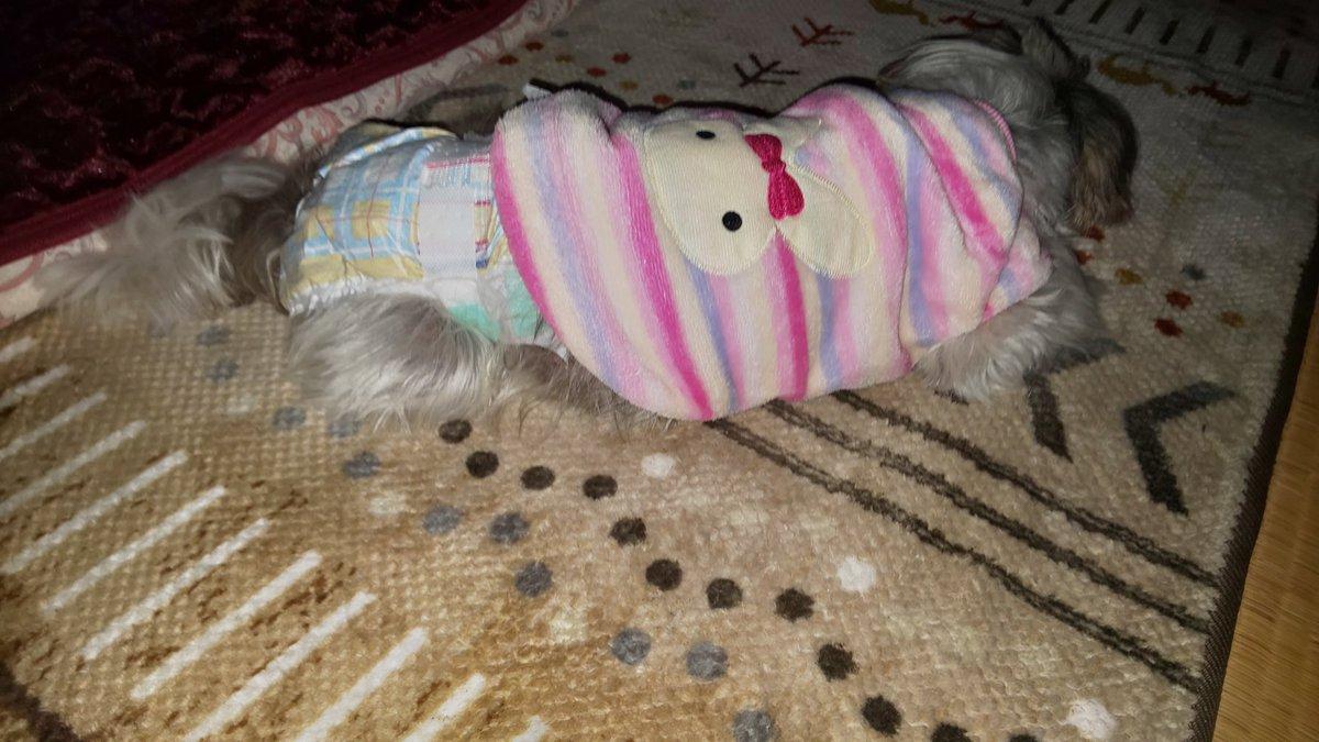 深夜の徘徊無事終了でず。 おやすみなさい #徘徊 #老犬介護 pic.twitter.com/HcwgRKvpHS