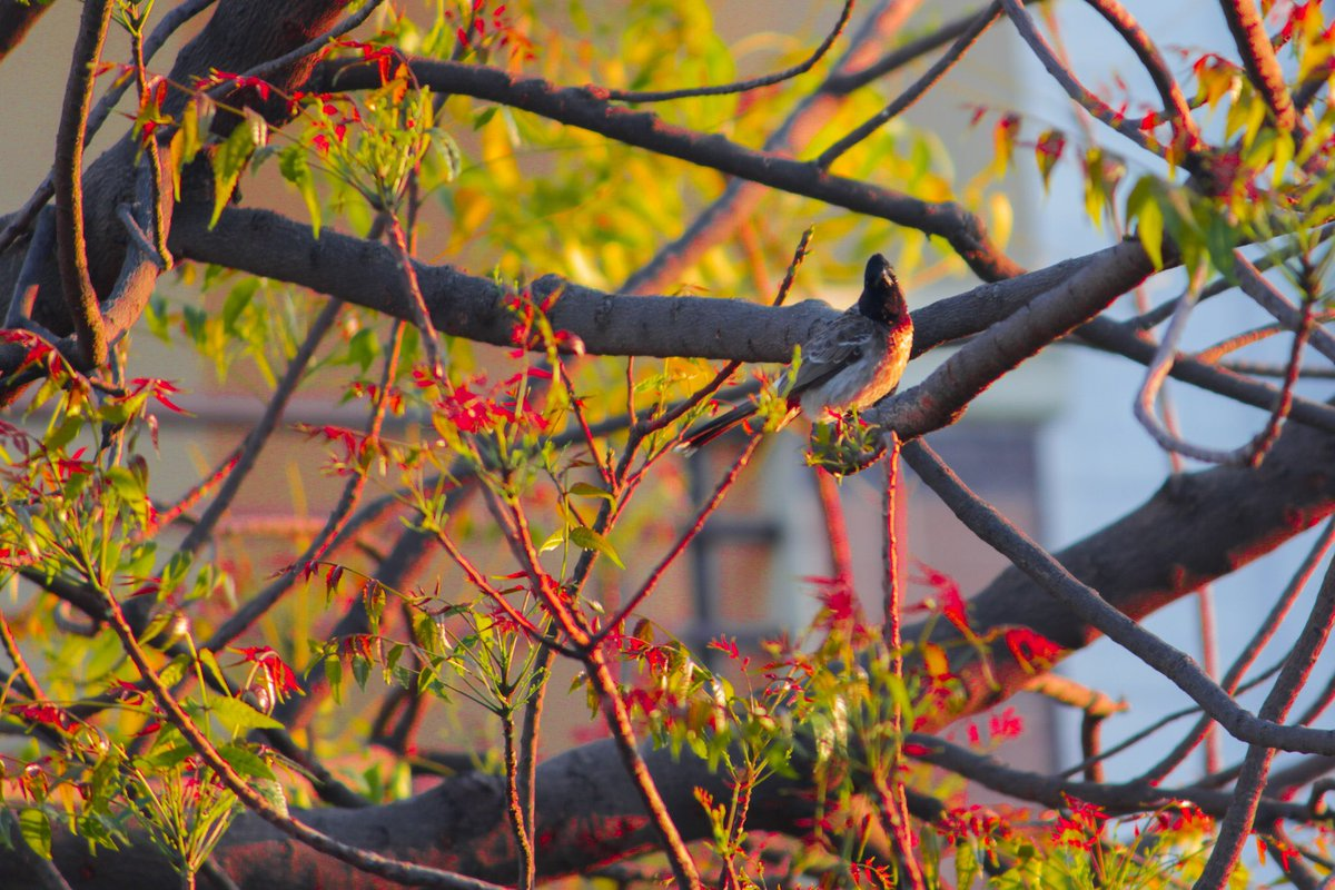 #birds #bird #nature #birdsofinstagram #wildlife #naturephotography #birdphotography #birdwatching #photography #wildlifephotography #animals #ig #birding #of #best #birdlovers #parrots #captures #love #aves #naturelovers #perfection #canon #instagram #birdlife @CanonUSAimagingpic.twitter.com/xlh2kZXJQ6