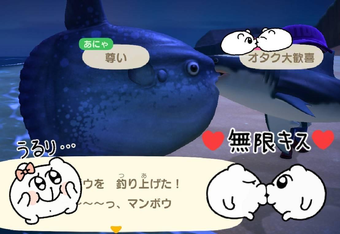 今日は初通信にて魚Kissした