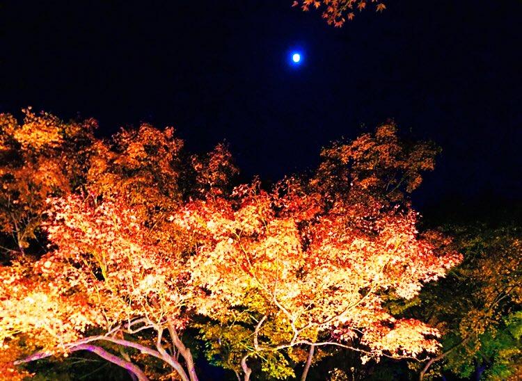 Good night☆*゚ I'll do my best tomorrow too. #写真好きな人と繋がりたい #高校生 #高校生カメラマン #高校生と繋がりたい #紅葉  #東京 #写真が奏でる私の世界  #春から高2 #おやすみ #医学部 #フォローお願いします #フォロー #RT  #リツイートお願いしますpic.twitter.com/0UchCf1hUS