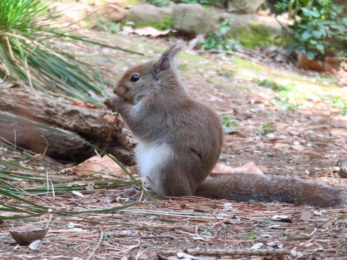 #井の頭自然文化園 #リスの小径  #ツイッターで楽しむ動物展覧会pic.twitter.com/3G4RT73uDc