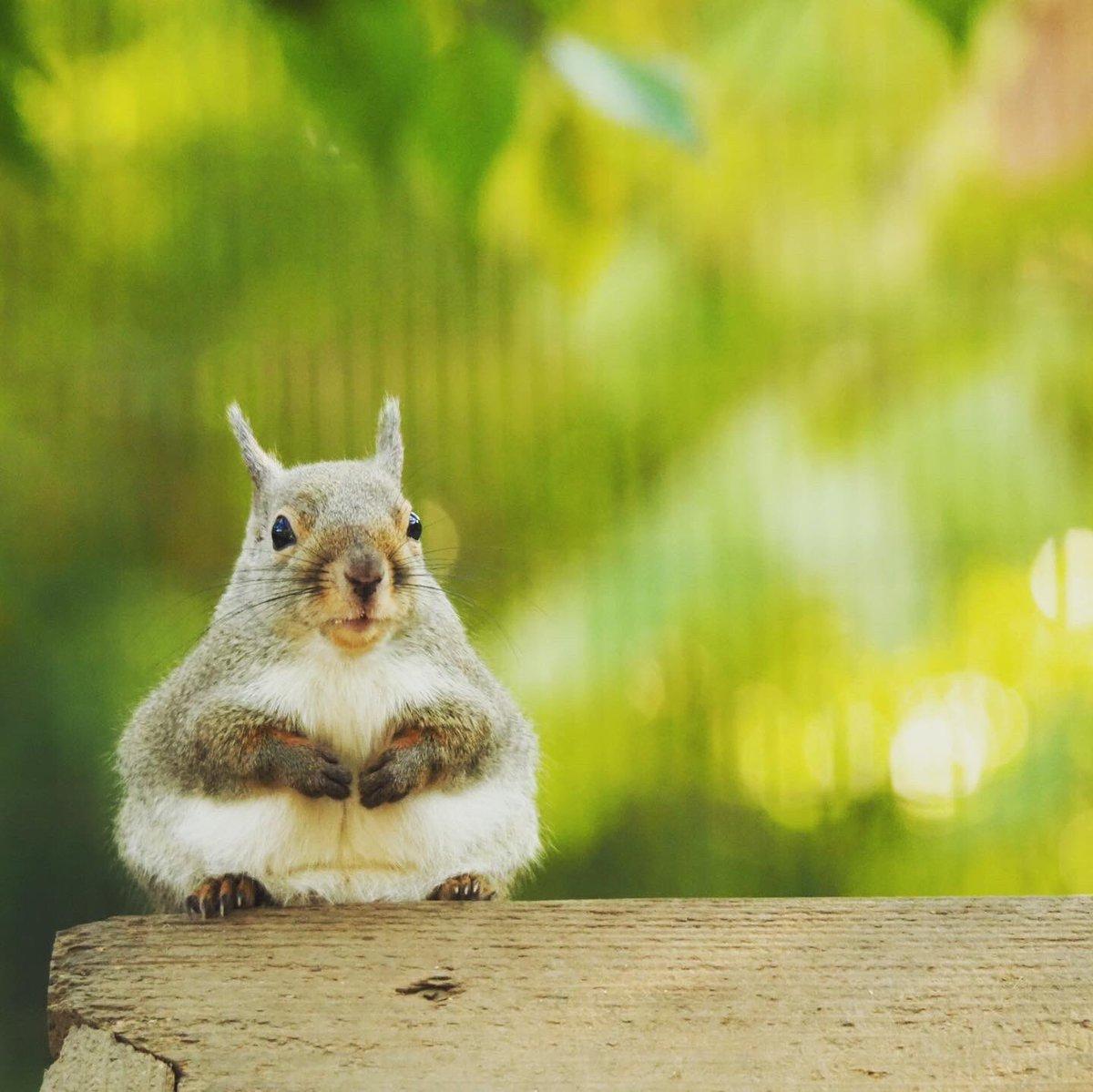 リスしか出せるものはありませんが… #井の頭自然文化園 #リスの小径 #ツイッターで楽しむ動物展覧会pic.twitter.com/yqUUli2Aka