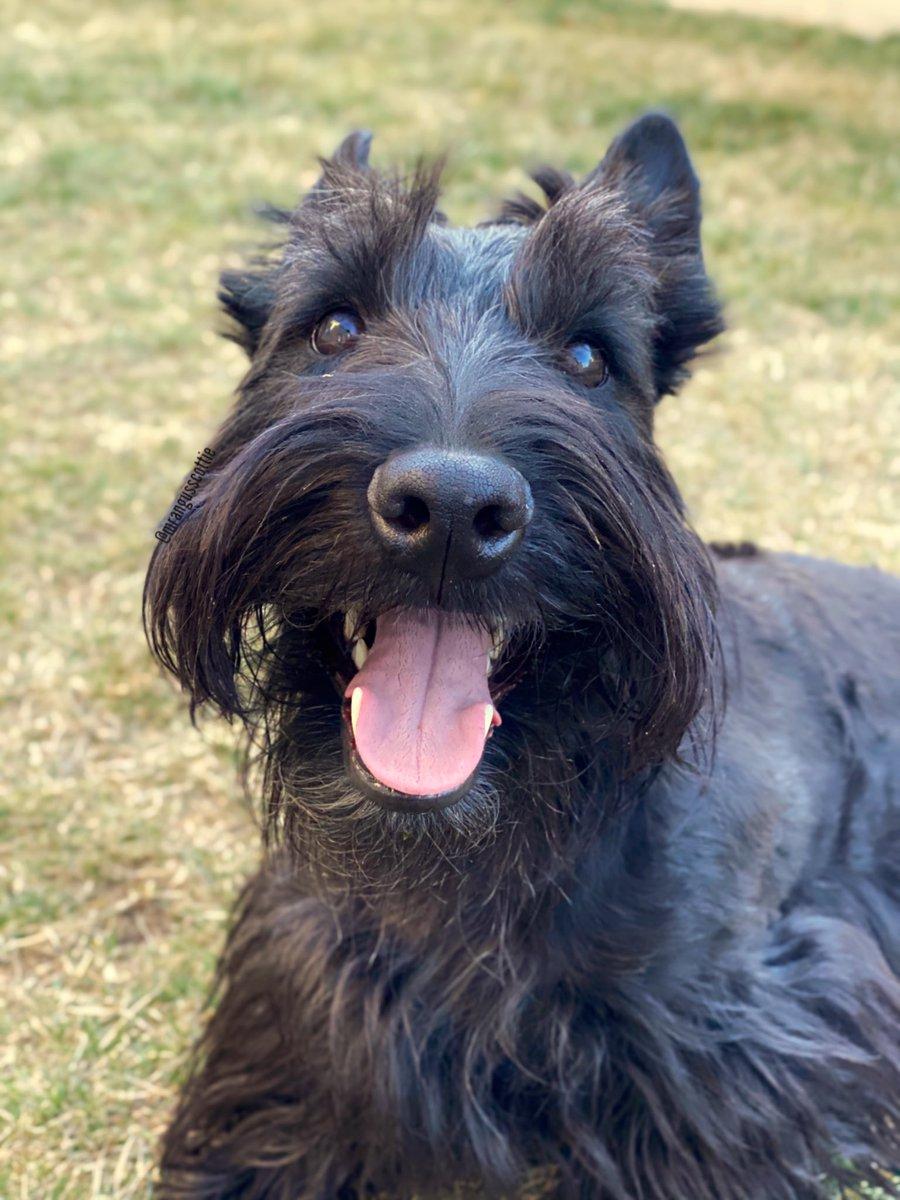 Nothing much today. Just happ. . . #happydog #happysaturday #dog pic.twitter.com/LY0DZvIXcA