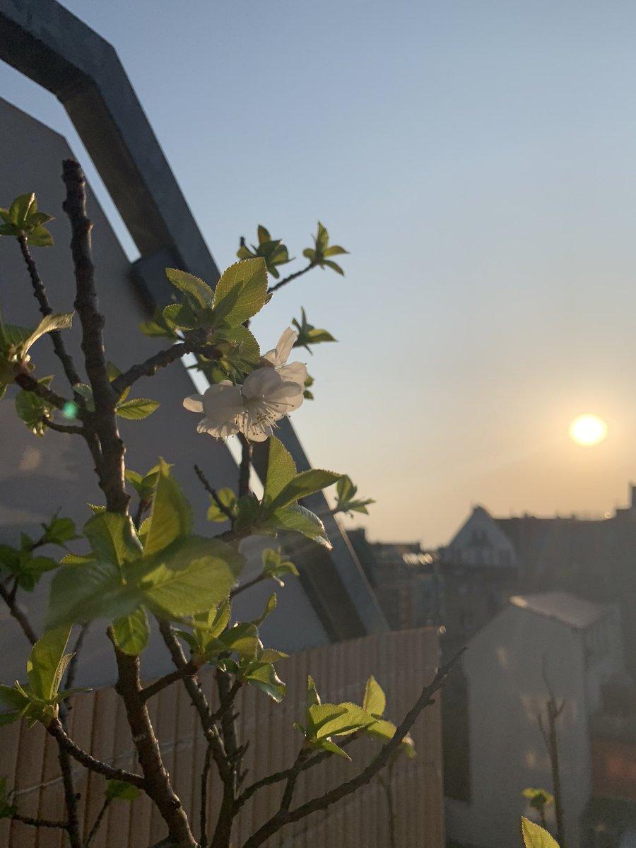 Springtime in Nippes #köln pic.twitter.com/ZpHvwdlSuV