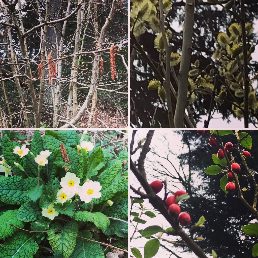 Lovely spring walk in the woods today. Beautiful nature. Nothing beats it pic.twitter.com/SVcwsBycxJ