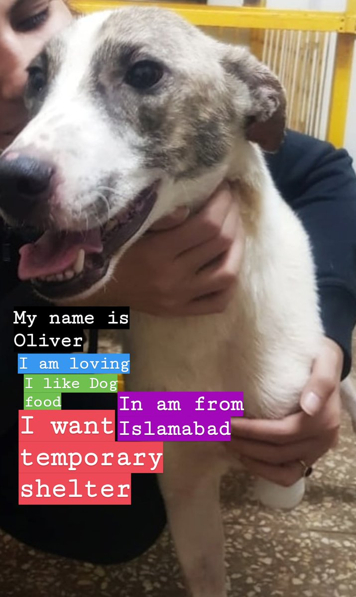 #dogs #dogs #dogsoftwitter #Adoption  #IslamabadPolice #IsolationLife #DogsofTwittter #DogLover #dogstylepic.twitter.com/FADGolY8IR