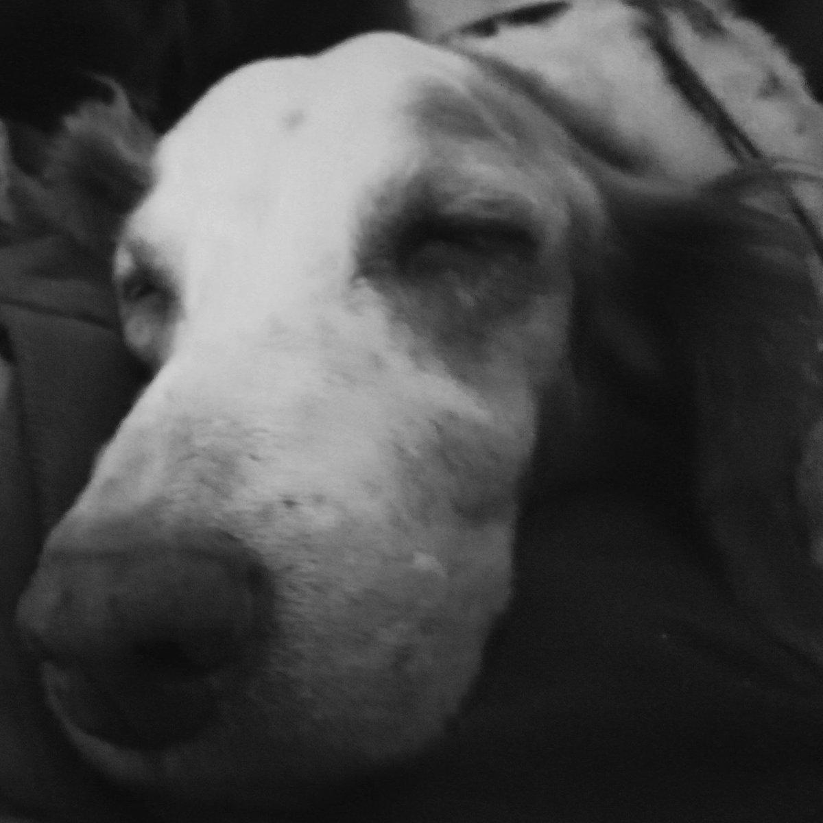 Relaxed  #blackandwhitephotography  #DogsofTwittter pic.twitter.com/MQ0Zu7LVdd
