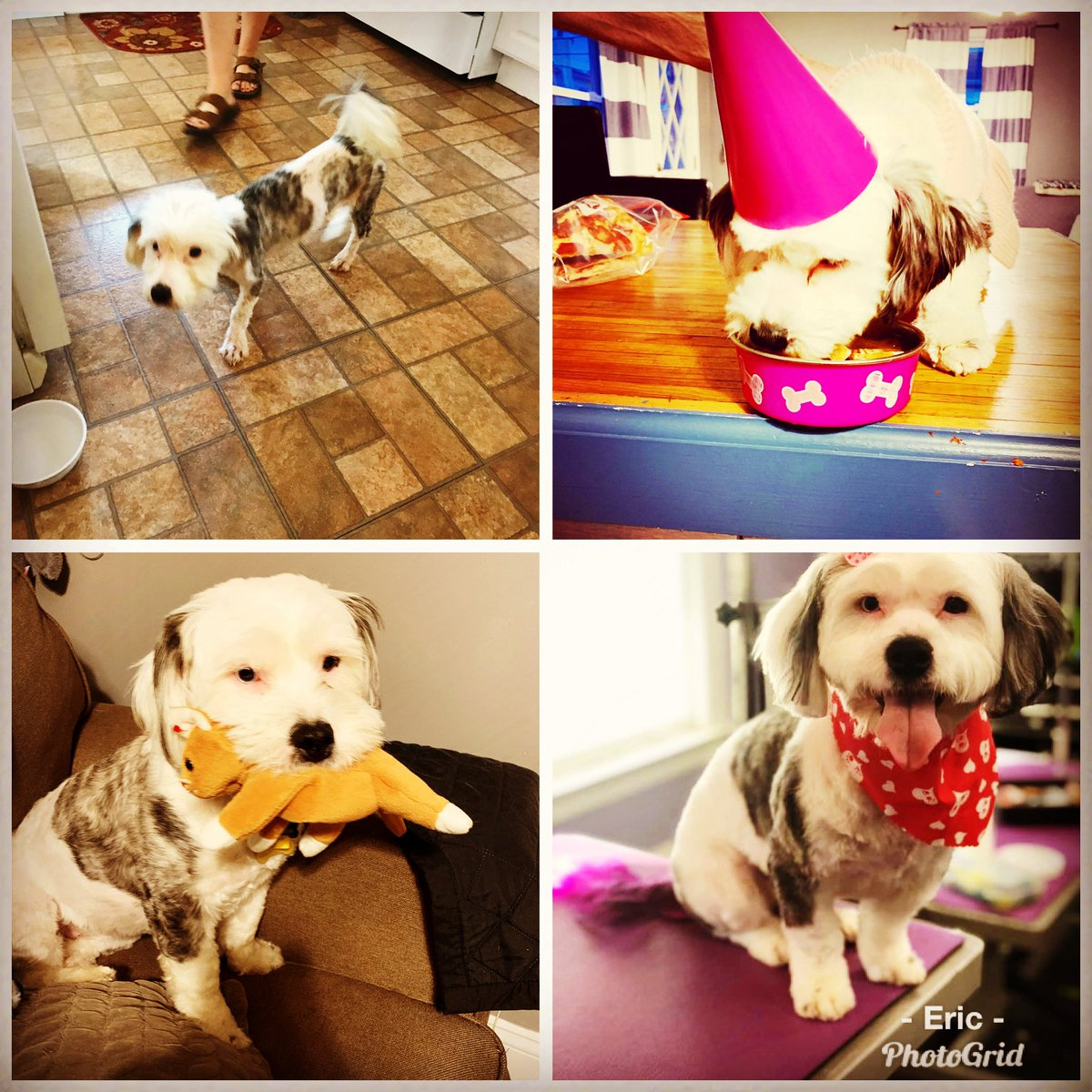 Happy birthday Crystal! #DogsofTwittter living the good life after being rescued from the hood. pic.twitter.com/ip2zehsZQ4