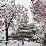 【これは貴重】雪化粧の桜と松本城が、とても美しい!