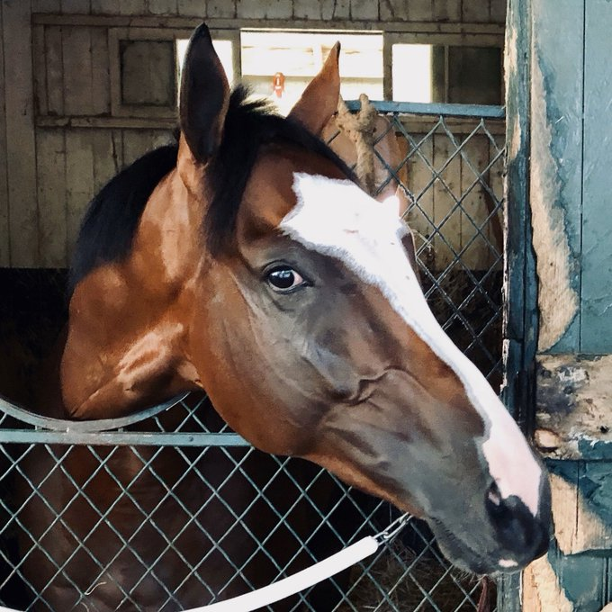 Tiz the Law – Florida Derby 2020