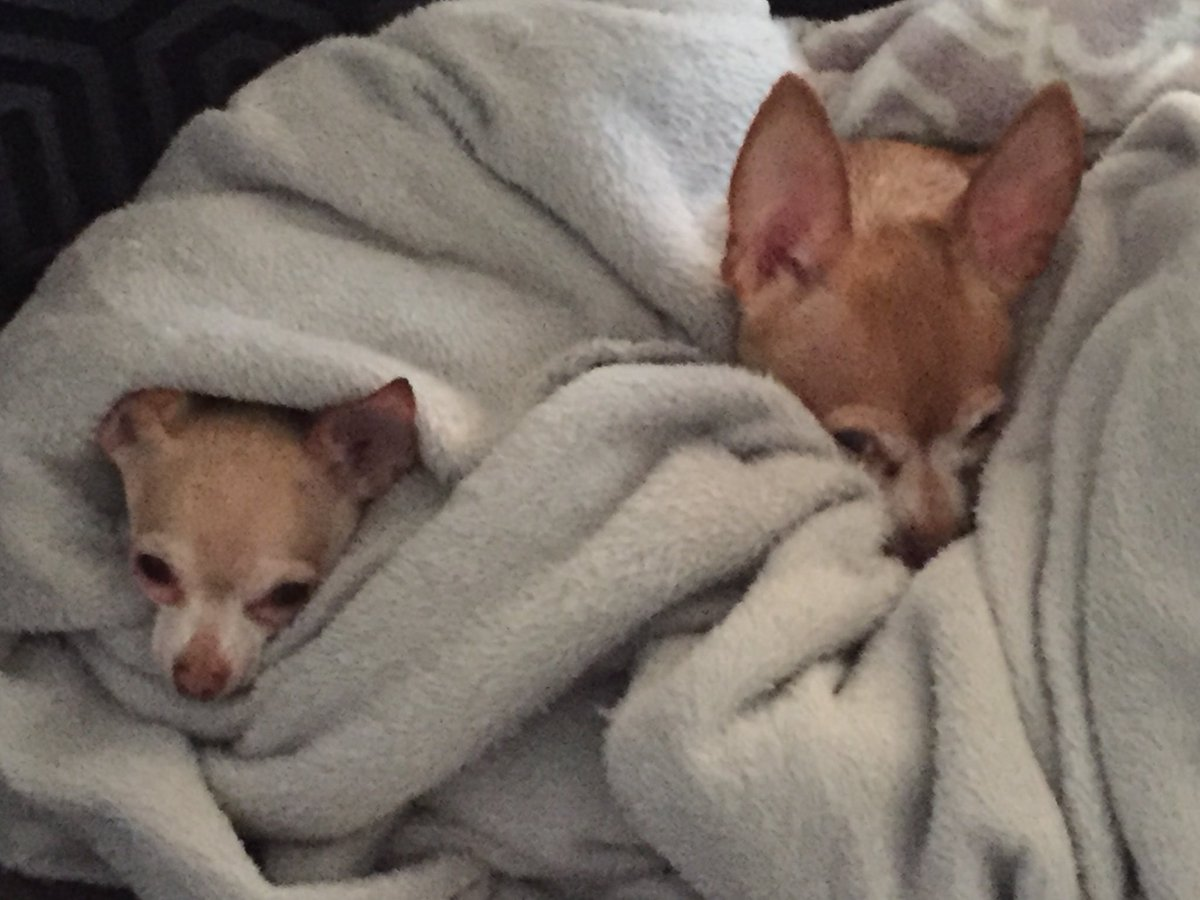 We're hunkered down hoping the storms stay below us. #Chihuahua #SpringWeather pic.twitter.com/nLh9ykjosr