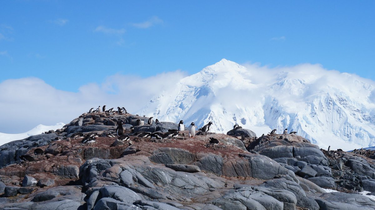 Rewind to cheeky #penguins 🐧   🗺📍#antarctica  📸 #antarcticpeninsula  ♯ #snow #ice #mountain #landscape #cold #nature #mountain #adventure #travel #southpole #travelwithquark #bluesky #gentoopenguin #penguin #wildlife  👀 @VisitArg_en 🇦🇷 @QuarkExpedition 🛳  @ST_TravelMag 📰
