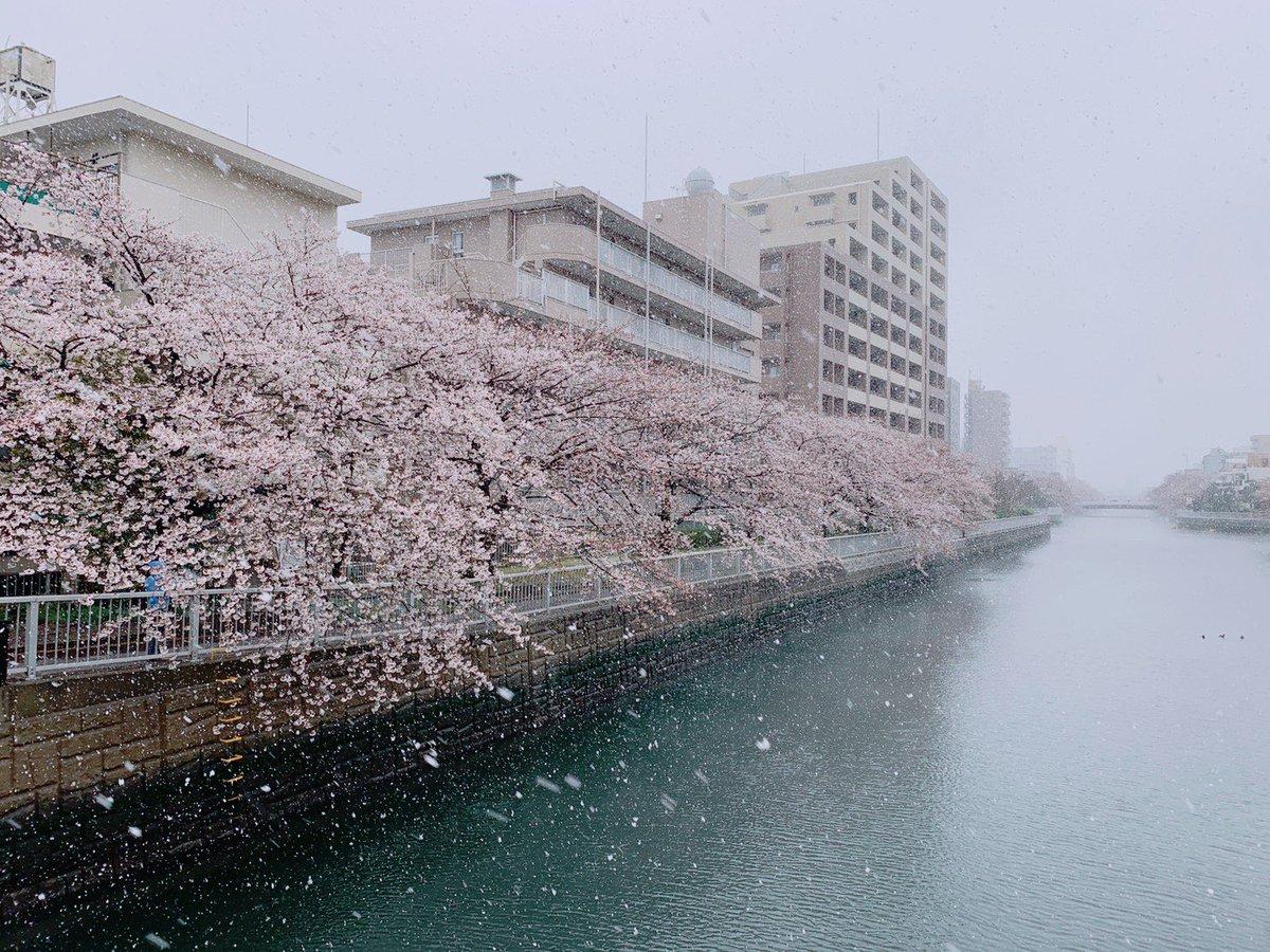 Anothe quiet Sunday morning Beautifully Solenm scene, cherry blossoms blooming in Spring snow #snow #tokyo #sakurapic.twitter.com/nu2U6OOKiz