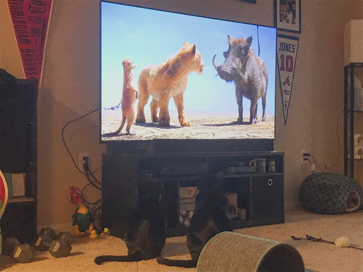 Ozzie & Ronnie are apparently big Lion King fans @_We_Rate_Cats @LionKingMovie pic.twitter.com/XRpKyfb0be