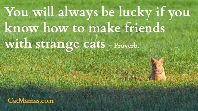 Being around pretty much any kind of #cat makes me feel lucky, really! How about you? catlover pic.twitter.com/XoLyLfITA8