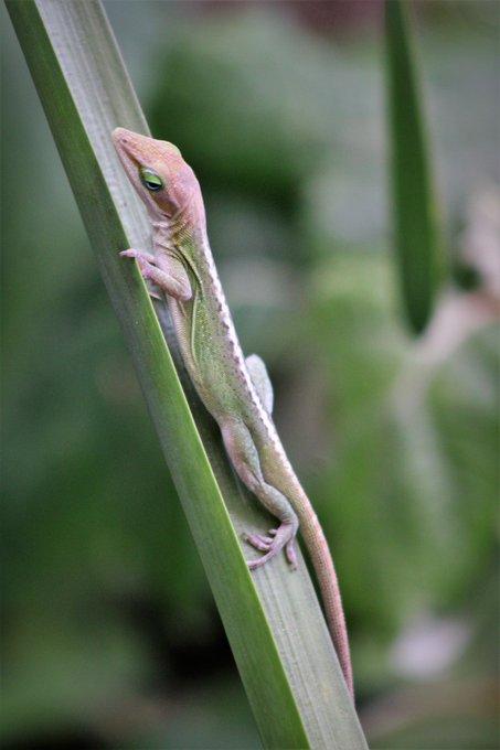 's Media: Lizard life. #lizard #nature #naturelover @naturephotography https://t.co/o2EApg724S