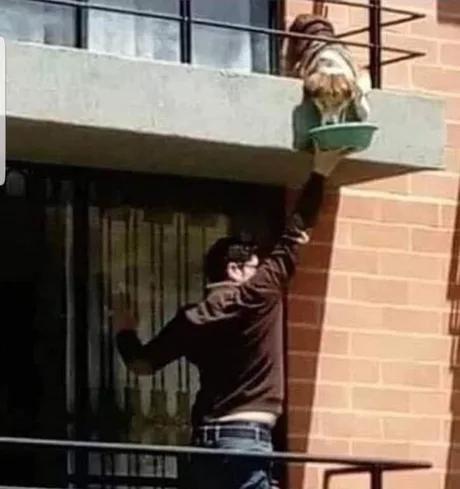 この犬の飼い主が入院している事を知り食べ物を与え続けた階下の人