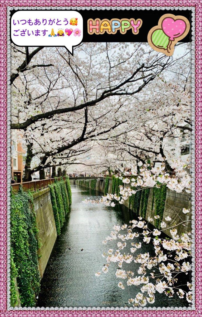沢山のいいねRT #ありがとうございます  いいねRT消える通知がこないなど不具合が続いています  昨日のポカポカから 雪が降っています  桜が散ってしまうのが残念です   穏やかな日をおすごしください   #感謝 #TLでお花見pic.twitter.com/tnjKnZ8pyJ