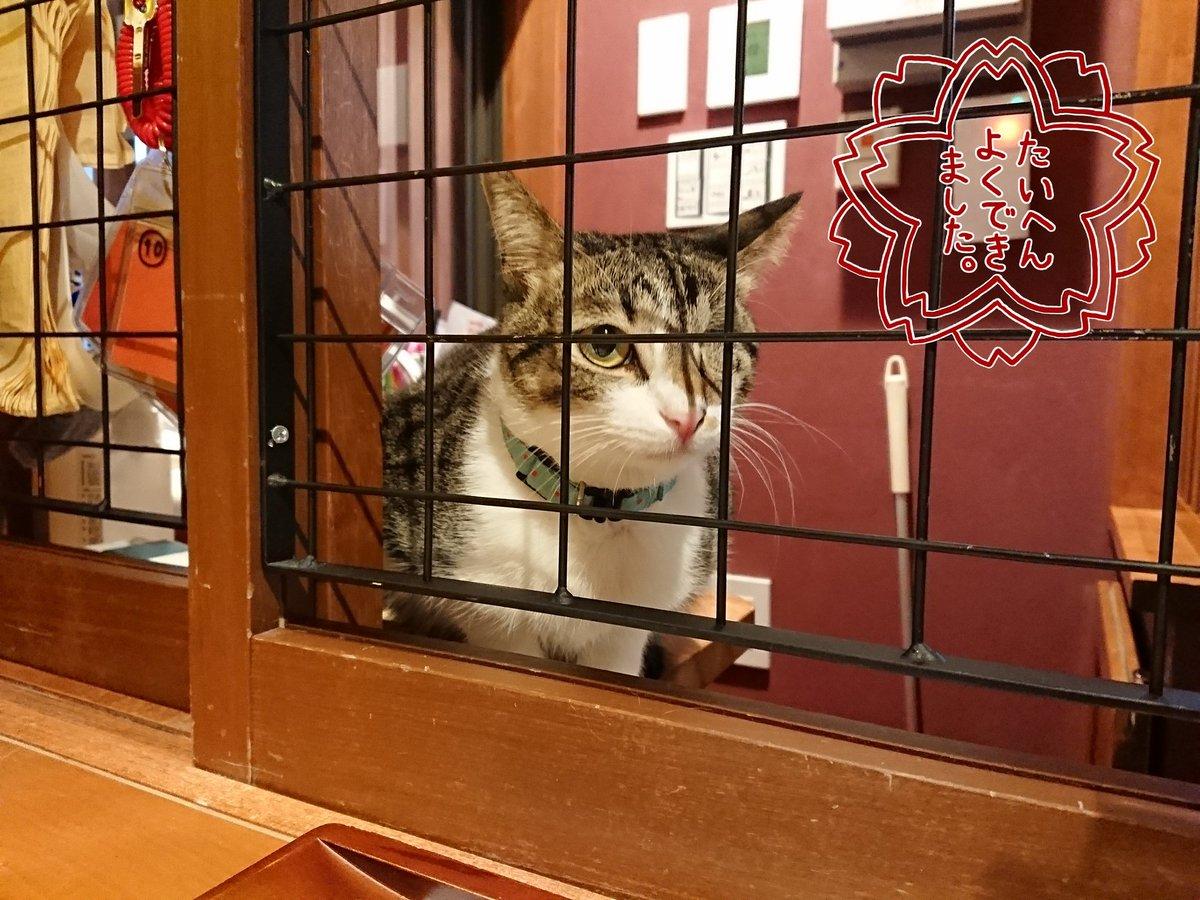 ねこ 浴場 & ねこ 旅籠 保護 猫 カフェ ネコリ パブリック 大阪