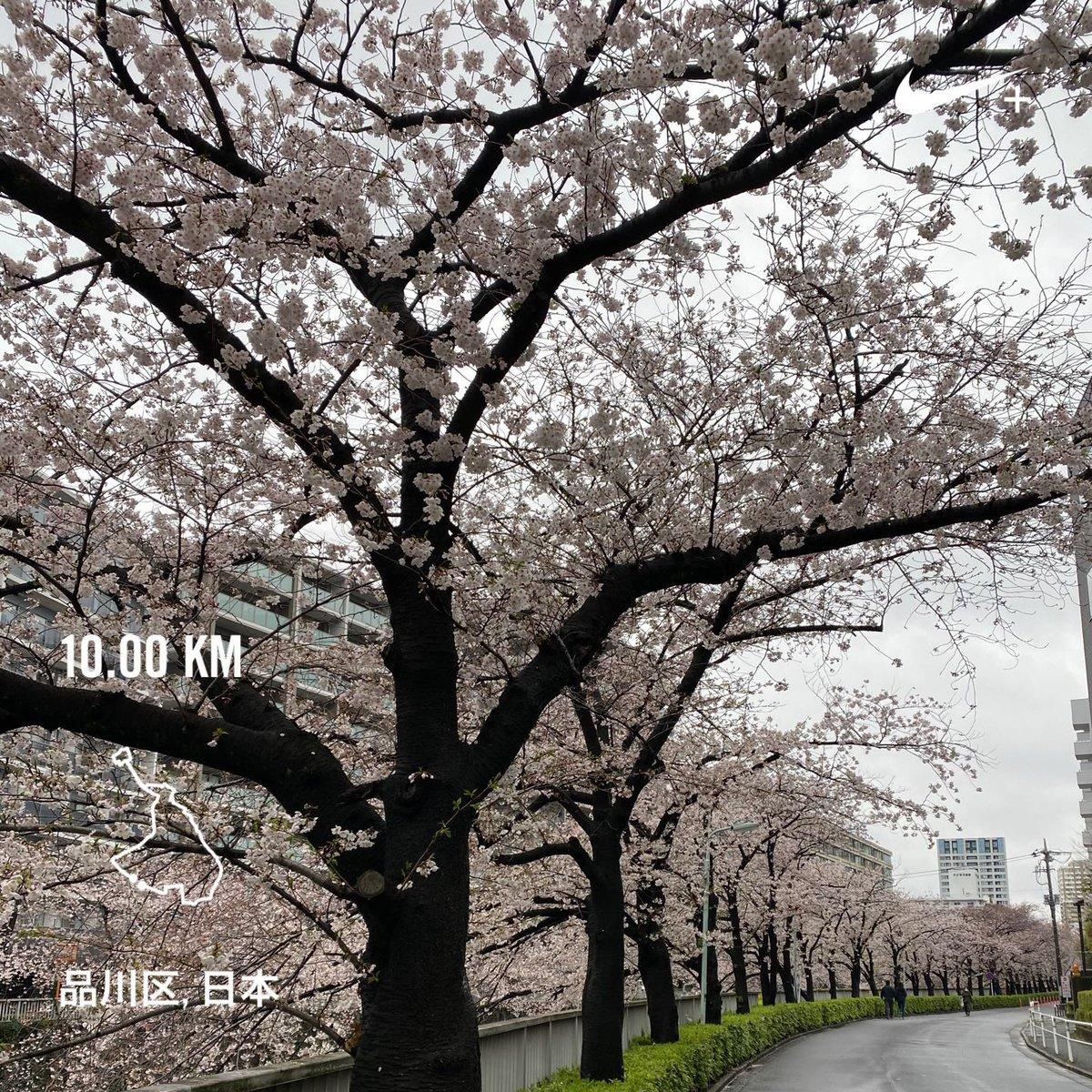 #10km #running #NRC #shinagawatogoshi #osaki #gotanda #meguroriver