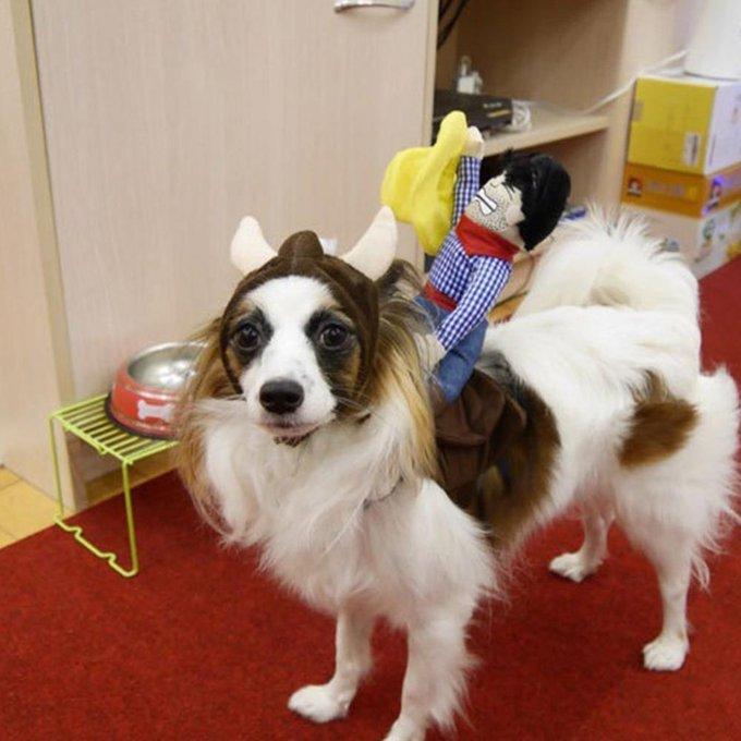 's Media: #lovekittens #dogsitting Dog's Funny Rider Costume https://t.co/12Gap2j7lP https://t.co/6pflVy7y49