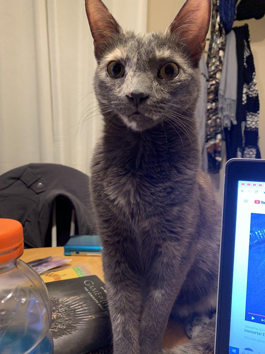 Izzy: my human says I'm a cutie.  #cats #CatsOfTwitter #CalicoCrewpic.twitter.com/vpgfZzK3NY