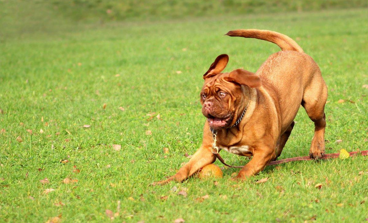 Looks like he slammed on the breaks! #dog #friendspic.twitter.com/xiszzn3p4S