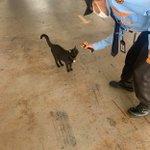 ラオスでは猫も発熱チェック!徹底したコロニャ対策!