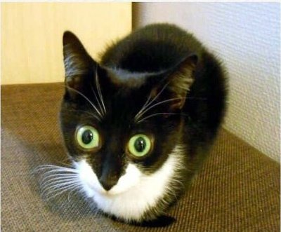 """""""When a #cat closes its eyes around you it means it trusts you.""""  My cat: pic.twitter.com/ihM5VM0a89"""
